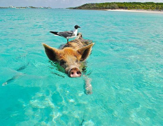 Kdy jet na Bahamy